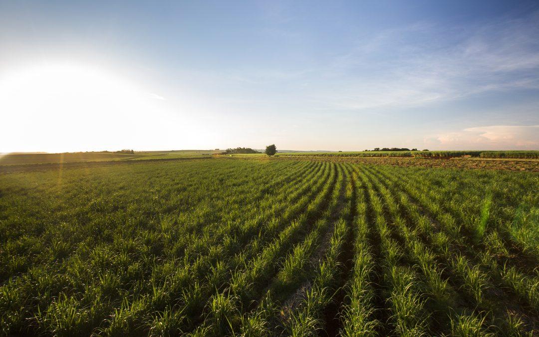 Successful land reform